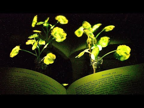 llumination from nanobionic plants to replace some electric lighting