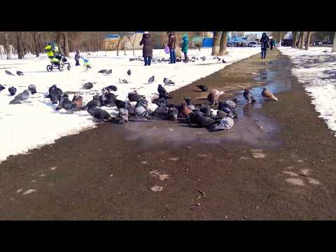 Мариупольские голуби слишком суровы...