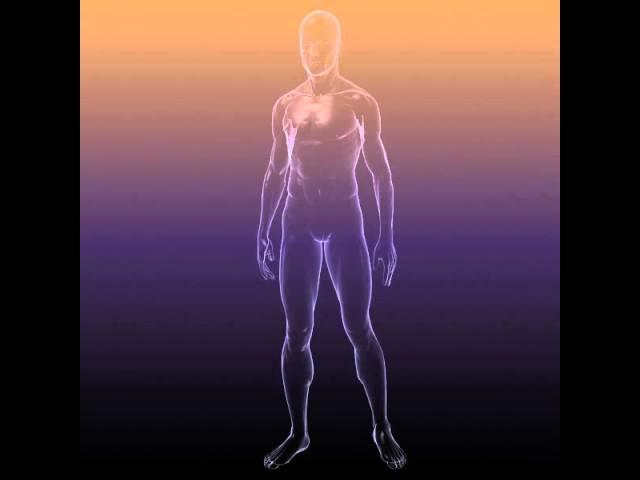 Male And Female Anatomy - transparent bodies 3D Model   FlatPyramid