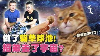 【黃阿瑪的後宮生活】做了貓草球池!招弟去了宇宙?