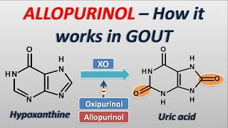 Allopurinol - How it works in treatment of GOUT