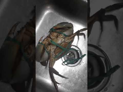 , title : 'butter and garlic crabs. jannix version