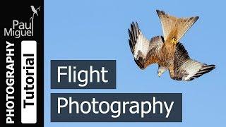 How to Photograph Birds in Flight (Canon 1DX Mark i)