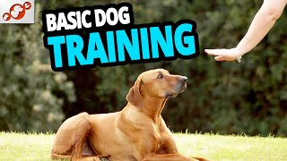 🐕 Basic Dog Training – TOP 10 Essential Commands Every Dog Should Know!