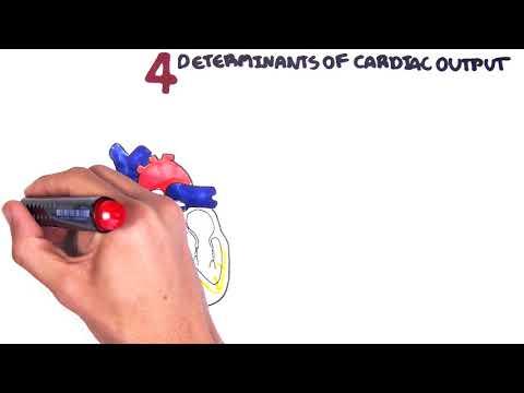 Fizjologia układu krążenia - pojemność minutowa serca (pojemność wyrzutowa, częstotliwość akcji serca, preload i afterload)