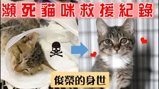 【 SoybeanMilk_Cat】 Rescue a DYING CAT