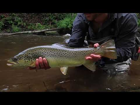 Guides Day Off and Big Browns