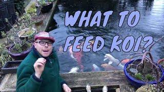 What do you feed koi carp? - Feed koi | What to feed koi?