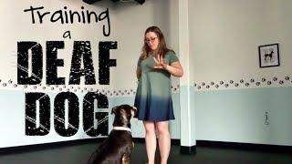 Training a DEAF DOG- Training Tip Tuesday
