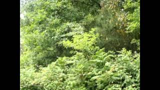Los sonidos de la naturaleza.