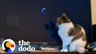 This Cat's Obsessed With One Movie | The Dodo Cat Crazy by The Dodo