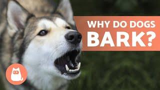 10 Reasons Why Dogs BARK 🐶 Dog BARKING Explained