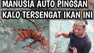 AWAS JANGAN SAMPAI TERSENGAT | MENEMUKAN LION FISH