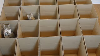 ملايين المشاهدات لمتاهة القطط الكرتونية