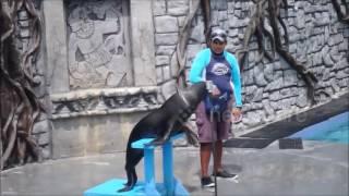 Смотреть онлайн Тюлень отлично спел под фанограмму