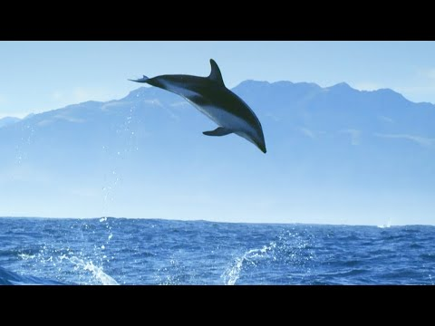 Diving With Dolphins in a Remarkable Video