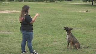 What to do if an aggressive dog approaches you | KVUE