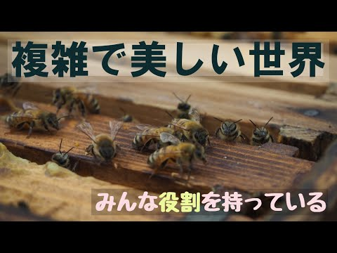 , title : '北海道で【ぐるりの暮らし】#28「多様性の中で生きる」~ニワトリの卵がないのは何故?雑草、害虫、害獣との向き合い方。ミツバチに学ぶ自然と人間の関係性。僕らはみんな、ぐるりとつながる世界で生きている。