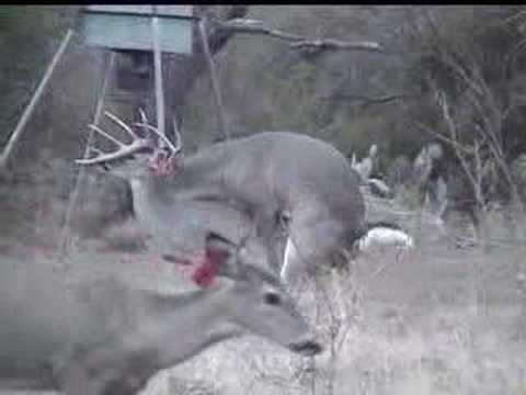 Animals Mating Videos: Deer Mating Video