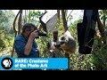 « Photo Ark », une quête pour documenter la biodiversité mondiale : Questions et réponses avec le photographe Joel Sartore et le directeur Chun-Wei Yi....