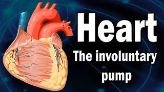 Heart | The involuntary pump | The Heart and Circulatory System - How They Work | Human Heart