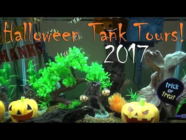 Halloween Fish Tank Tours! | 2017