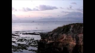 2014-05-18 Birds, Mushroom Beach, Lembongan