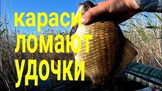 Рыбалка на озере алакуль курганская область
