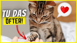 11 Dinge, die du viel öfter für deine Katze tun solltest!