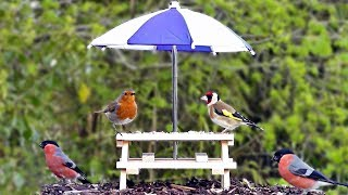 TV for Dogs : Videos for Dogs To Watch - 2 Hours of Beautiful Garden Birds ✅