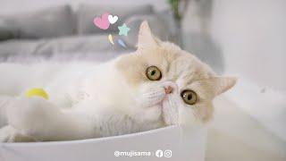 มารุรึป่าว มารุไม่น่ารักรึป่าว ❣️