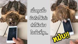 ถ้านั่นเป็นนิ้วคน คิดไม่ออกเลยจะเหลือแค่ไหน เต่าหรืองูกันเนี่ย!!... #รวมคลิปฮาพากย์ไทย