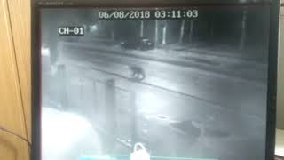 Медведи бегают по улицам