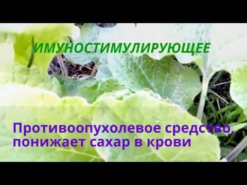 Кипрей лечение простатита