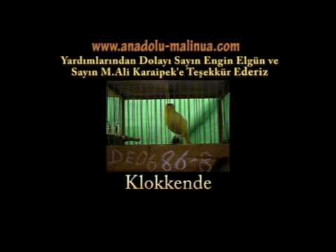 Preview video MALINOIS WATERSLAGER 2008