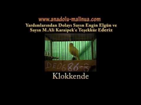 immagine di anteprima del video: MALINOIS WATERSLAGER 2008