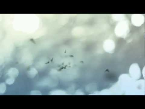 Sergeant Pluck himself - Treasures - Sergeant Pluck himself (Official Video)
