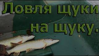 Ловля щуки на щуку Осенняя рыбалка 2018.