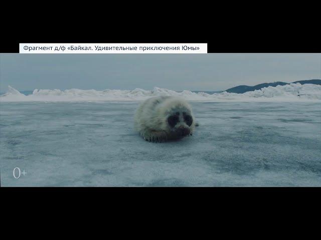 Премьеру документального фильма о Байкале покажут январе