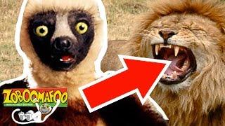 Zoboomafoo wildbrain - En Popüler Videolar