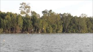 preview picture of video 'Kuala Selangor River Cruise Eagle Feeding Tour'