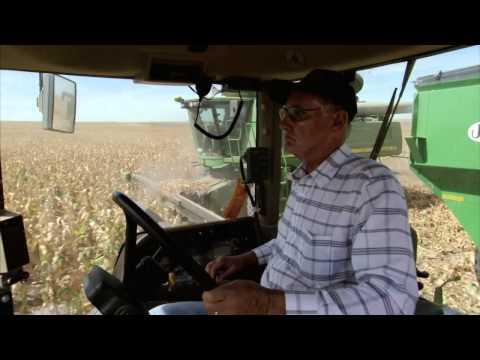 Kansas Farm Family Corn Harvest: America's Heartland