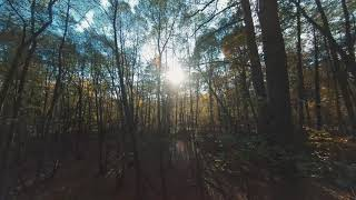 Flying Through The Autumn Forest - Part 2 - Relax - Soothing - FPV - 4K