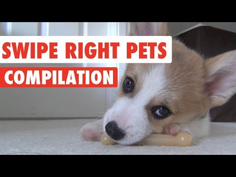 Swipe Right Pets Video Compilation 2017