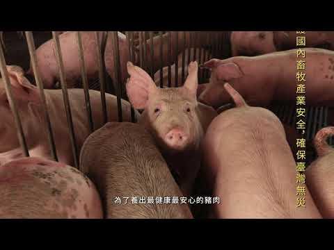 在地人 支持在地豬