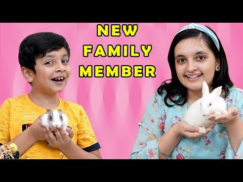 NEW FAMILY MEMBER | Apna pet aagaya | Short movie of our pets | Aayu and Pihu Show