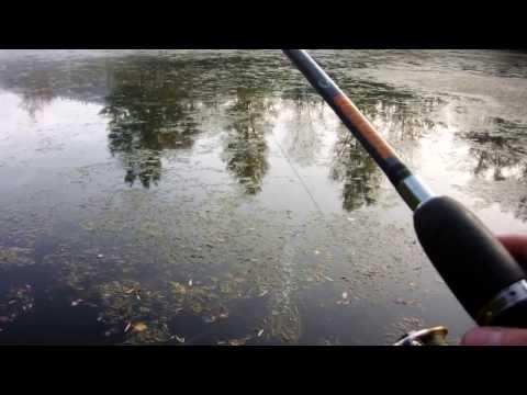 Alla su pesca