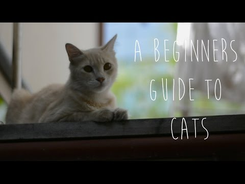 A Beginners Guide to Cats