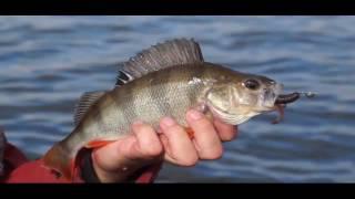 Рыбалка в могилеве весной