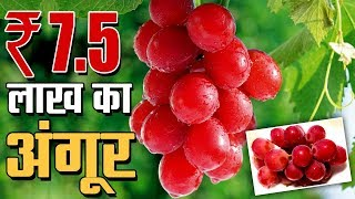 Grapes Cost A Whopping Rs. 7.5 Lakh In Japan | Capital TV